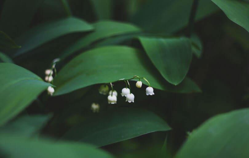 BioDX working with nature