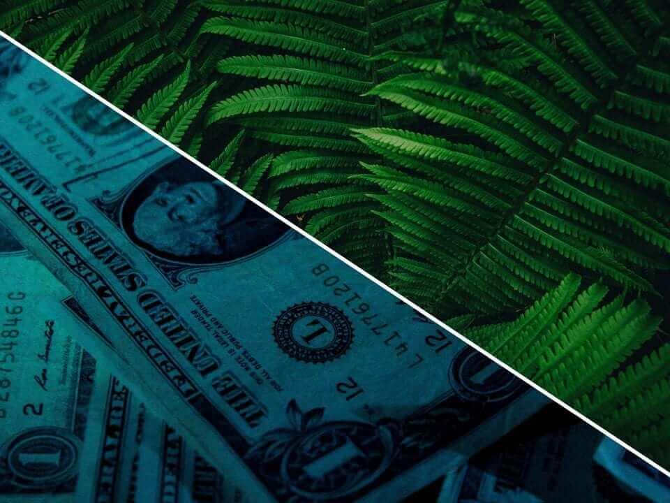 Environment vs Budget