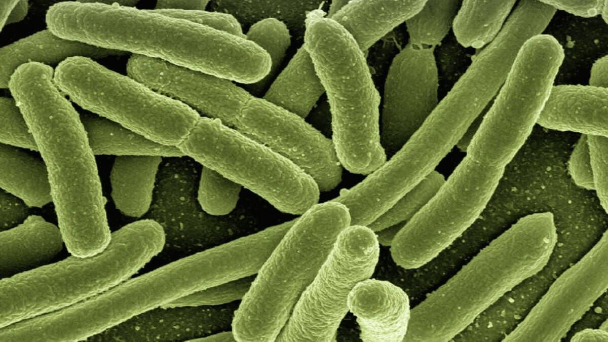 BioDX Eco-friendly Disinfectants